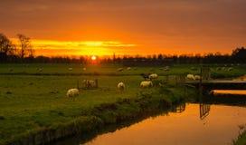 Holländskt landskap för soluppgång Arkivbilder