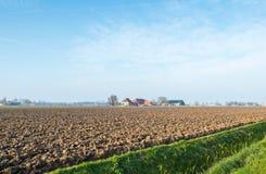 Holländskt polderlandskap i eftermiddagsolljus Royaltyfri Fotografi