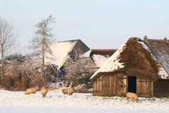 Holländskt polderlandskap med en sheepfold i vinter Arkivbilder