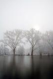 Holländskt snölandskap i dimman med solen Arkivfoto