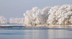 Holländskt snölandskap med den djupfrysta sjön och änder Arkivbild