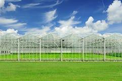 Holländskt växthus Arkivbild