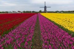 Holl?ndische Tulpe-Windm?hlen-Landschaft lizenzfreie stockbilder
