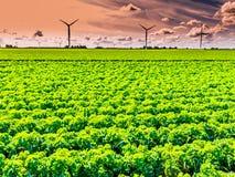 Holland - Ackerland und Windkraftanlagen Stockfotografie