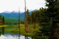 Holland Creek, Montana Stock Photos
