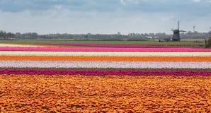 holland fjäder Royaltyfria Bilder