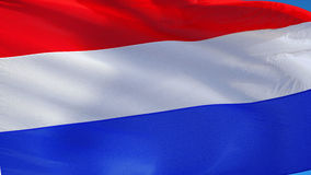 Holland flag in slow motion seamlessly looped with alpha stock video footage