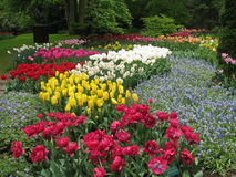 тюльпаны Royalty Free Stock Image