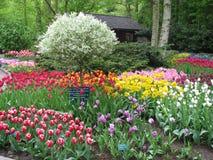 тюльпаны Royalty Free Stock Photos