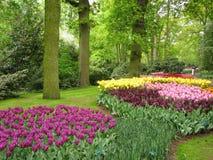 тюльпаны Royalty Free Stock Images