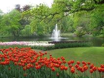 тюльпаны Royalty Free Stock Photography