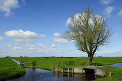 Holland landscape. Typical Holland landscape in the summer Stock Photos