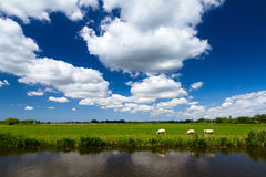 Holland landscape Royalty Free Stock Photo