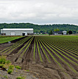 Holland Marsh. A large percentage of Ontario's vegetables are grown here in the fertile soil of the Holland Marsh Stock Photo