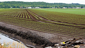 Holland Marsh. A large percentage of Ontario's vegetables are grown here in the fertile soil of the Holland Marsh Stock Image