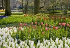 Holland-Park Lizenzfreie Stockfotografie