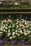 Holland park, London. Royalty Free Stock Photo