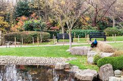 Holland Park, one of public London parks. Japanese garden at Holland Park, one of public London parks Royalty Free Stock Photos
