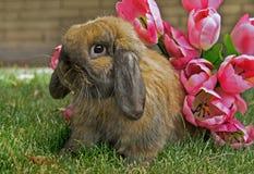 Holland snoeit Konijn met bloemen royalty-vrije stock fotografie