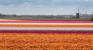 Holland in spring Royalty Free Stock Images