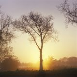 Holland, tree in a landscape at sunrise Royalty Free Stock Photography