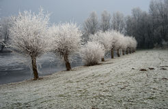 holland vinter Arkivfoto