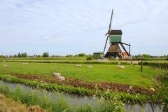 holland wiatraczek Obraz Stock