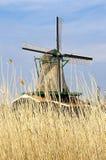 holland wiatraczek Zdjęcia Royalty Free