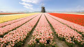 holland windmill Royaltyfri Bild