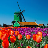 holland windmill Arkivfoton