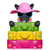 Holliday luggage dog Royalty Free Stock Image