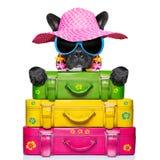 Holliday luggage dog Royalty Free Stock Image