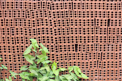 Hollow brick Stock Photography