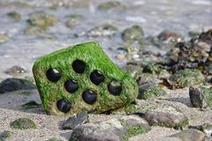 Hollow brick on a rocky beach at low tide covered with green algae. Hollow brick with rounded edges on a rocky beach at low tide covered with green algae Royalty Free Stock Photo