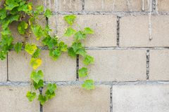 Hollow brick wall Royalty Free Stock Image