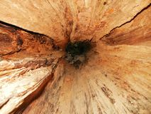 Hollow Log Royalty Free Stock Image