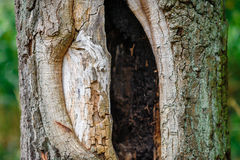 Hollow of an old tree Royalty Free Stock Photography