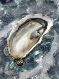 Hollow oyster Royalty Free Stock Photos