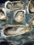 Hollow oysters from Brittany Royalty Free Stock Photography