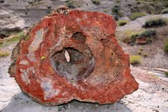 Hollow Petrified Rock stock photography