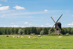 Hollow post windmill in Brabant, Netherlands. Polder landscape with hollow post windmill near Almkerk, Brabant, Netherlands Royalty Free Stock Photography