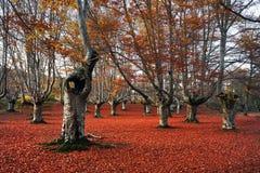 Hollow tree Stock Photography