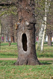 Hollow Tree. With what looks like a face drawn in chalk to look like the Halloween mask Stock Photo
