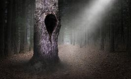 Hollow Tree Surreal Forest Background, Dark Woods. Mysterious dark woods and forest with a hollow tree. The hole hides many different things. Surreal trees makes stock images