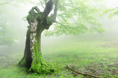 Hollow tree in forest Stock Photography