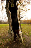 Hollow tree. Stock Photo