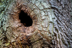 Hollow of a tree trunk. Abstract hollow of oak tree trunk Stock Photo