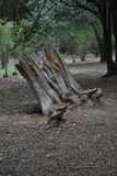Hollow trunk of dead tree stock images