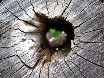 Hollow in wood Stock Image