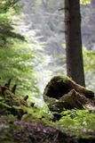 Hollowed log. On forest floor royalty free stock images
